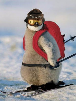 google-pingvin algoritmusfrissítés